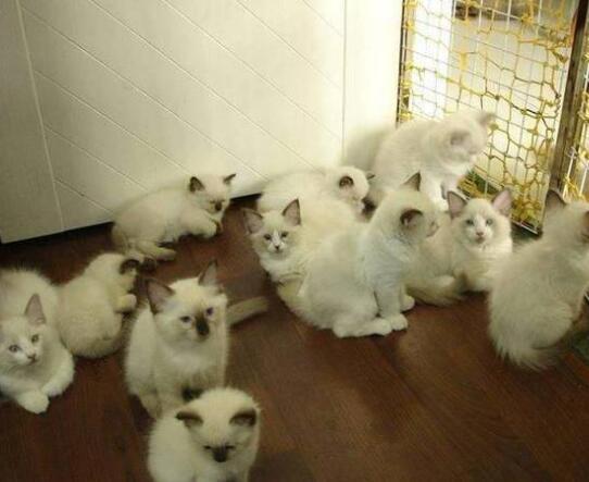 买房当猫宅被投诉 究竟是怎么回事?