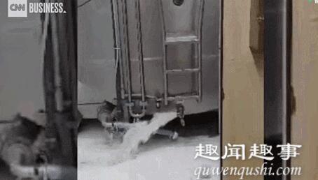 全美每天要倒掉至少1000万升牛奶 内幕曝光简直不忍直视