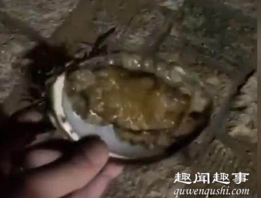 青岛游客海里捡鲍鱼被要500块 究竟是怎么回事?
