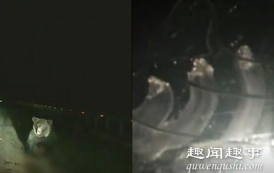 司机深夜高速上开车前方突然扑来巨大黑影 吓得瞬间屏住呼吸到底是什么情况?
