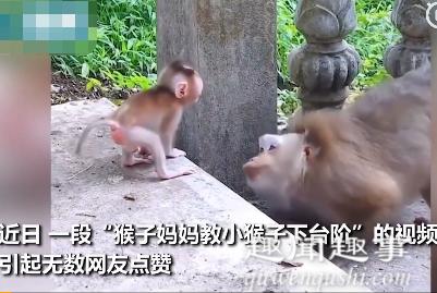 近日,一只猴妈妈教宝宝下台阶,耐心鼓励眼神温柔,有网友调侃:我还不如一只猴儿