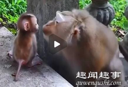 猴妈妈教娃下台阶耐心鼓励眼神温柔 网友:我还不如一只猴具体是什么情况?