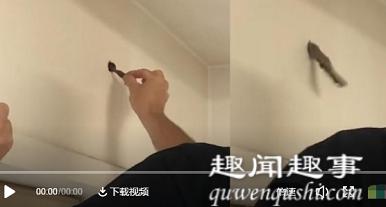 男子凑近家里墙上黑洞拿棍一戳 里面突然伸出一只手真相曝光实在令人震惊